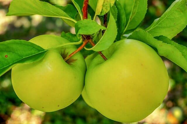mela albero alimentazione workout